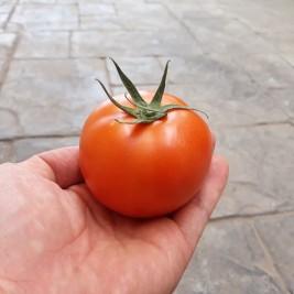 제주 토마토(5kg,10kg)