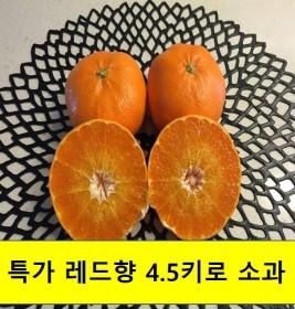 특가 레드향 소과 (4.5kg, 10kg)