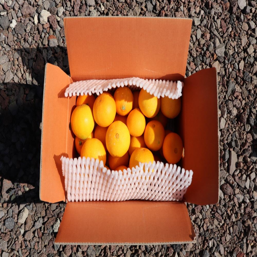 황금향 3kg 4.5kg(선물용, 가정용)